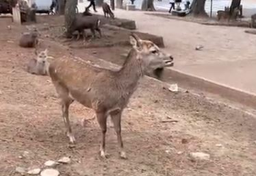 When deer attack