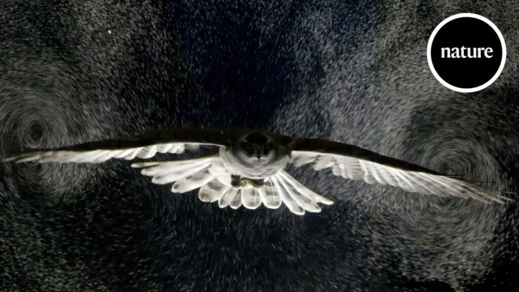 Incredible slo-mo video of raptors flying through bubble clouds … for science