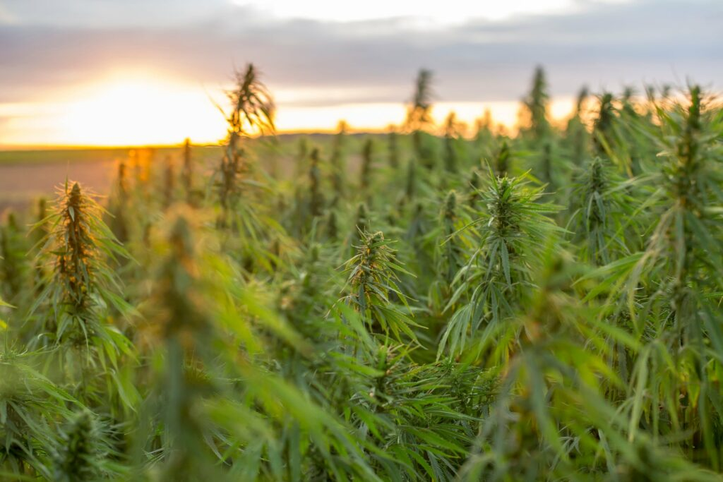 Canopy Growth Rolls Out New Line of CBD Topicals