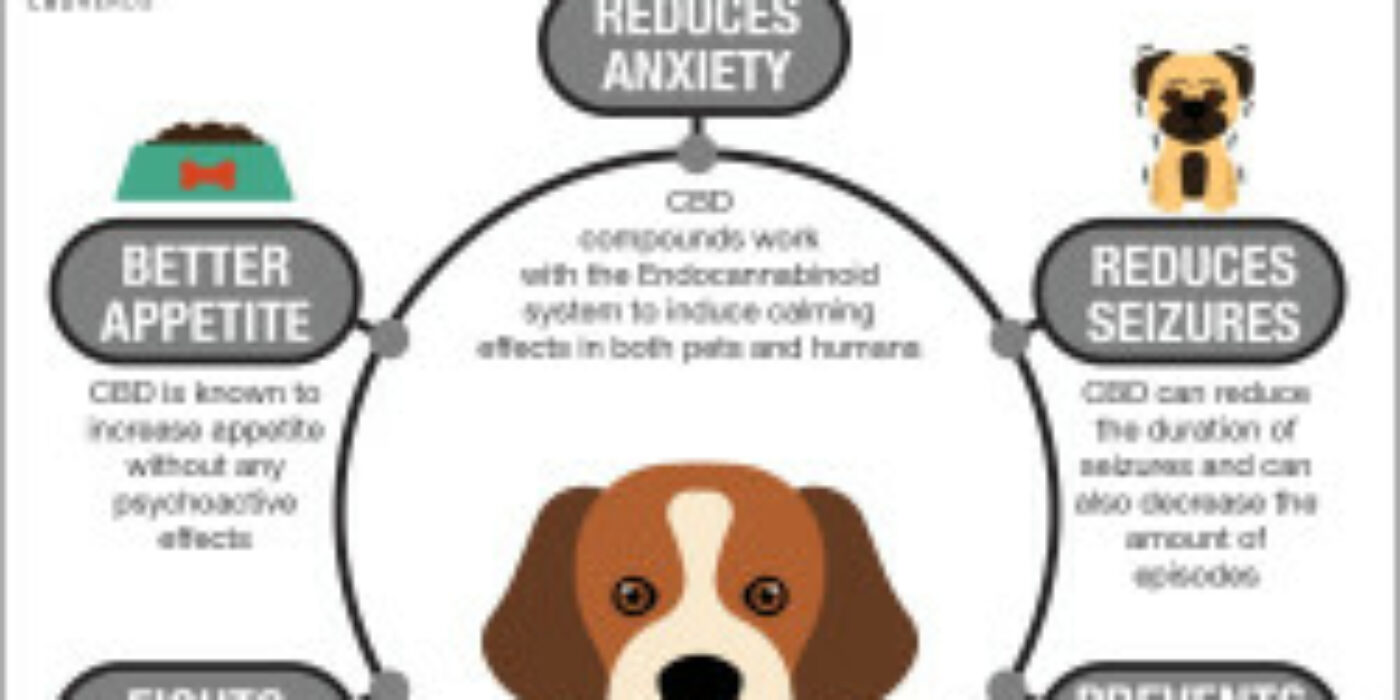 How CBD Can Help for Dogs/Pets?