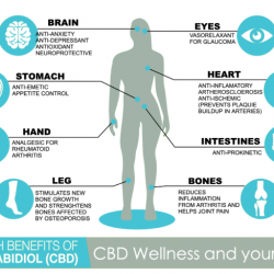 CBD Oil Health Benefits by CBD Oil Direct