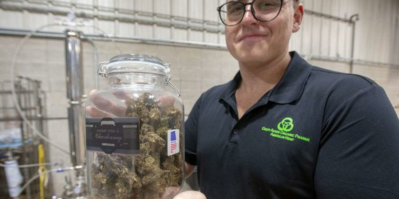 Regional organisation produces CBD products from Alabama grown help